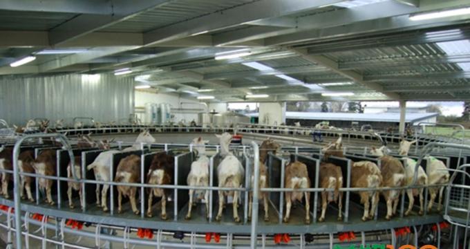 探访亚洲最先进羊乳工厂,一罐御智羊乳粉的诞生日记
