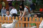 与羊亲近——公园里的羊年逸事